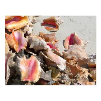 Seashells on the Beach | Turks and Caicos Photo Postcard