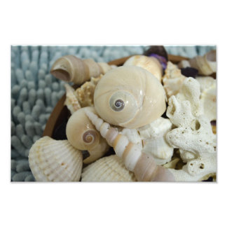 Seashells ! photo
