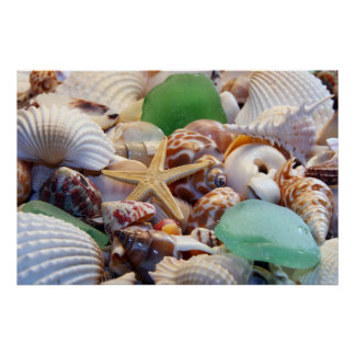 Seashells, Starfish & Beach Glass Poster