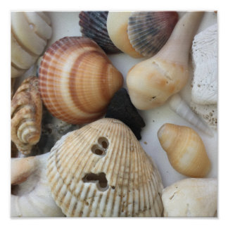 Seashells To Love Poster
