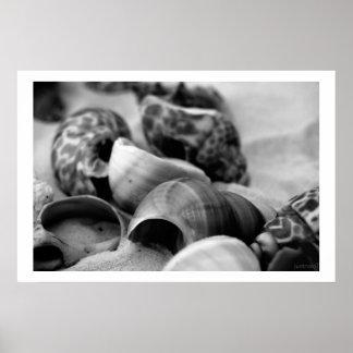 seashells white sand bw ii poster