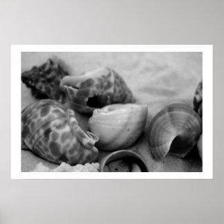 seashells white sand bw iii poster