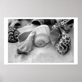seashells white sand bw posters