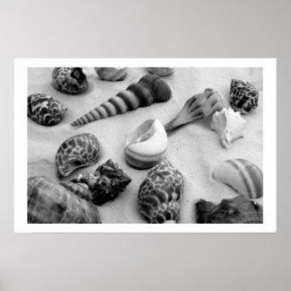 seashells white sand bw vi print