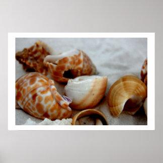 seashells white sand iii poster