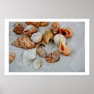 seashells white sand iv posters
