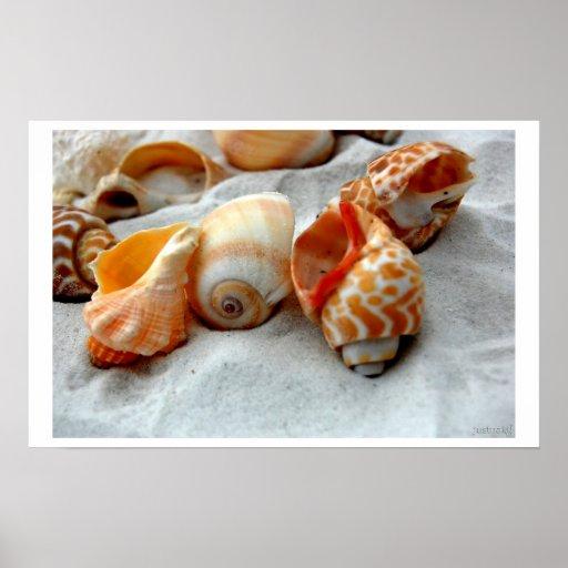 seashells white sand posters