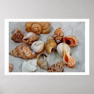 seashells white sand v posters