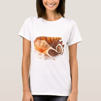 Seashells Women's T-Shirt