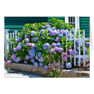 Seashore Hydrangeas Notecard