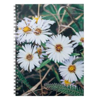 Seaside Daisies | Notebook