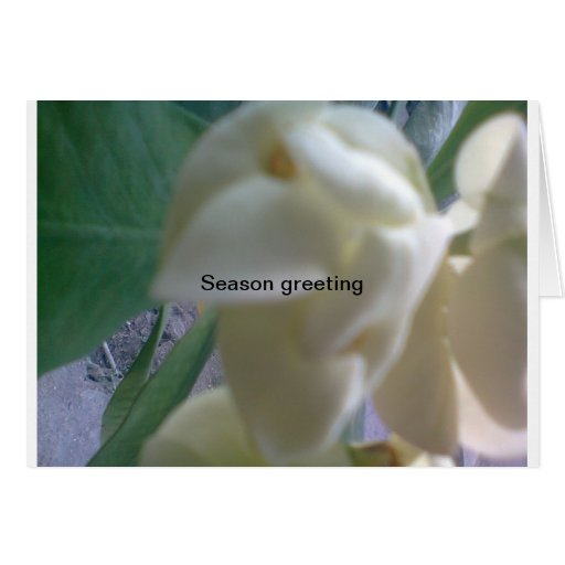season greeting greeting card