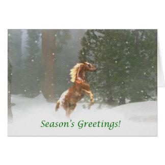 Season's Greetings Appaloosa Horse Card