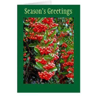 Season's Greetings Holiday Card w/ Red Berries