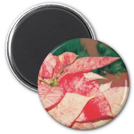 season's greetings poinsettia refrigerator magnets