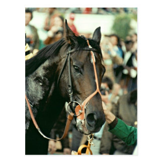Seattle Slew Thoroughbred 1978 Postcard