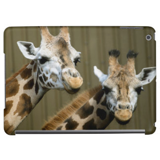 Seattle, Washington. Two giraffes