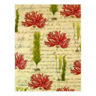 Seaweed and chorales postcard