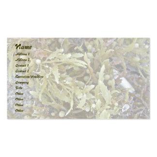 Seaweed Business Card