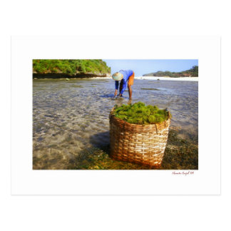 seaweed farmers postcard