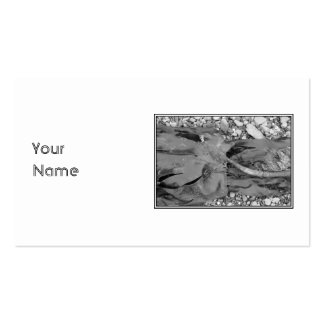 Seaweed on Pebbles. Double-Sided Standard Business Cards (Pack Of 100)