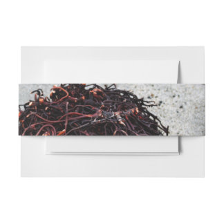Seaweed Roots Invitation Belly Band