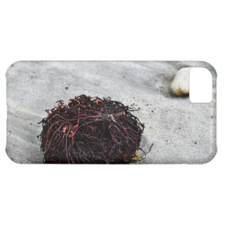 Seaweed Roots iPhone 5C Case
