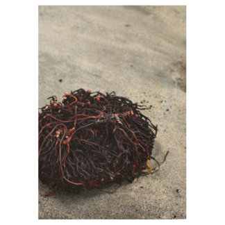 Seaweed Roots Wood Poster
