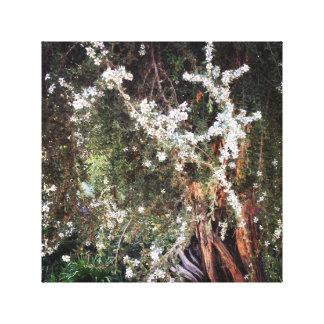 Secret Garden Gallery Wrapped Canvas