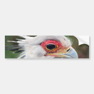 Secretary Bird of South Africa Bumper Sticker