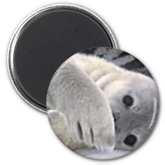 Secretive Seal Magnets