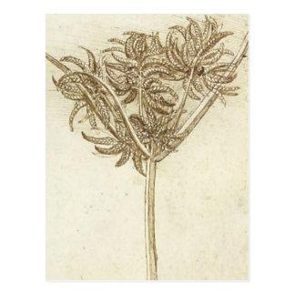 Sedge.jpg by Leonardo da Vinci Postcard