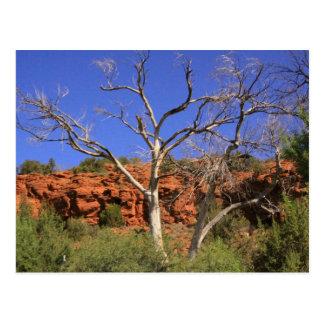 Sedona Landscape Postcard