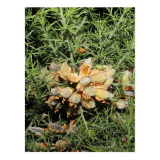 Seed Pods with Small Green Insect. Postcards