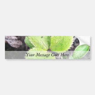 Seedling - Hellebore Car Bumper Sticker