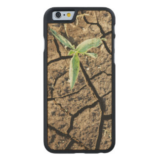 Seedling In Cracked Earth Carved® Maple iPhone 6 Slim Case