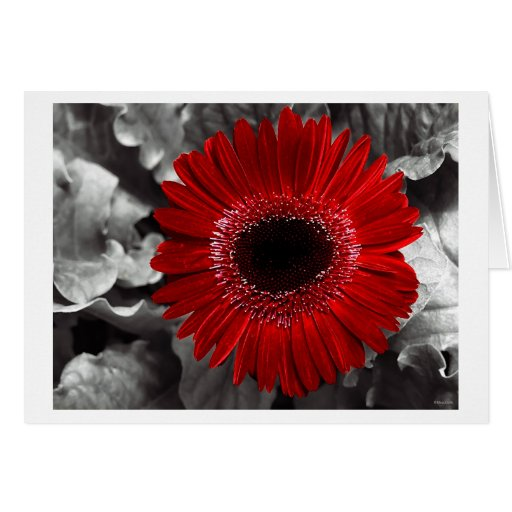 seen red greeting cards