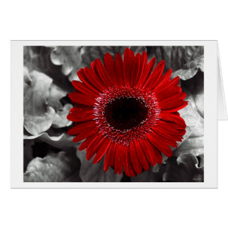 seen red greeting card