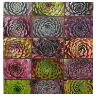 Sempervivum - Houseleek - Hauswurz - Collage Napkin