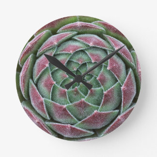Sempervivum Ohio Burgundy Round Clock