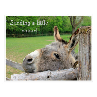 """Sending Cheer"" Unhappy Donkey Postcard"
