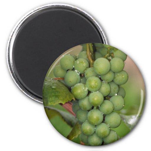 Seneca Grapes Refrigerator Magnet