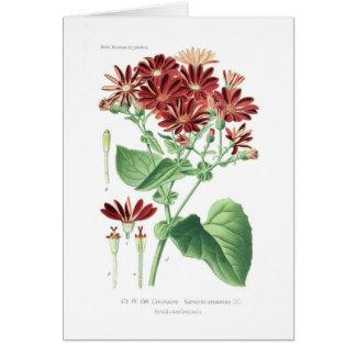 Senecio cruentus (Cineraria) Greeting Card