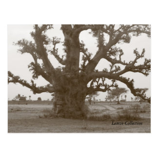 Senegal Baobab Tree Postcard