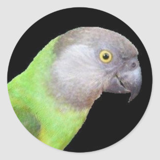 SENEGAL PARROT HEAD CLASSIC ROUND STICKER