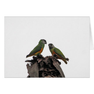 Senegal Parrots Card