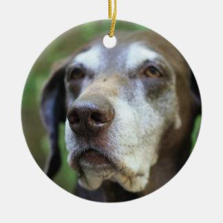 Senior German Pointer ornament