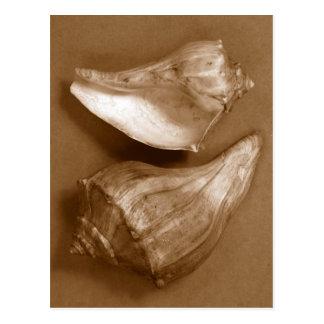 Sensual Shells Postcard