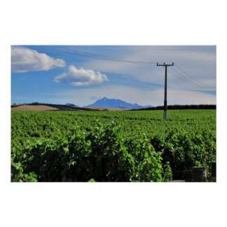Sentinel Over the Vineyard Poster