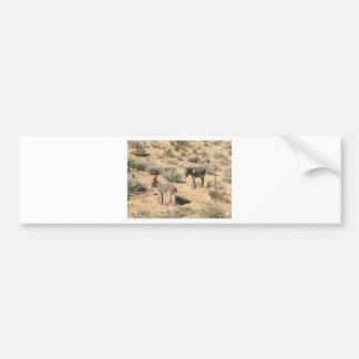 Separated by borders bumper sticker